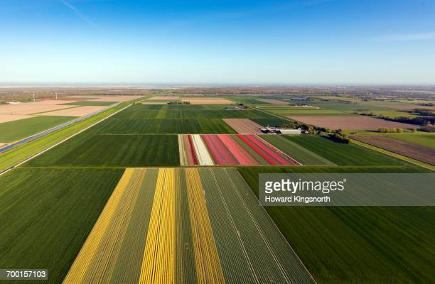 Aerial of Dutch tulip fields