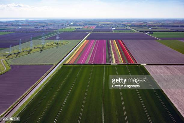 Aerial of Dutch tulip fields