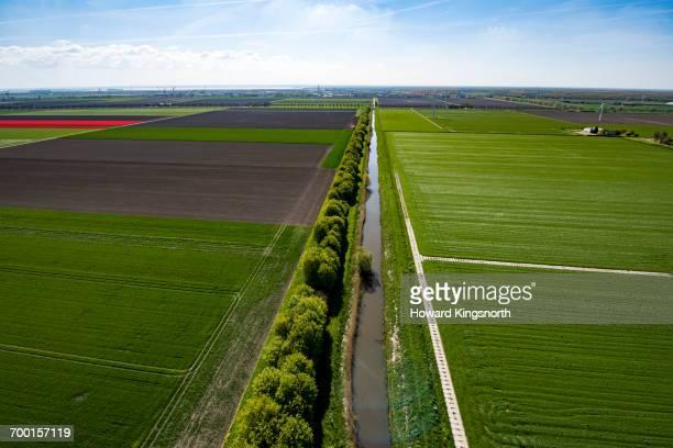 aerial of dutch tulip fields - canale foto e immagini stock