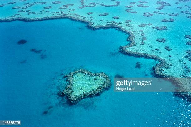 aerial of heart-shaped reef at hardy reef, near whitsunday islands. - 藻 ストックフォトと画像