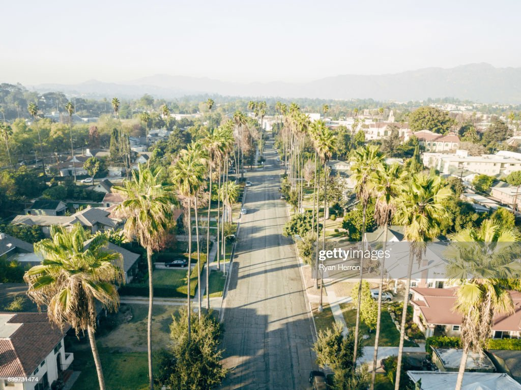Aerial of Palm Tree Lined Street : Stock Photo