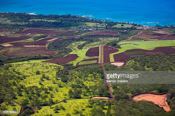 aerial of pineapple and fruit plantations on north shore. - merten snijders stockfoto's en -beelden