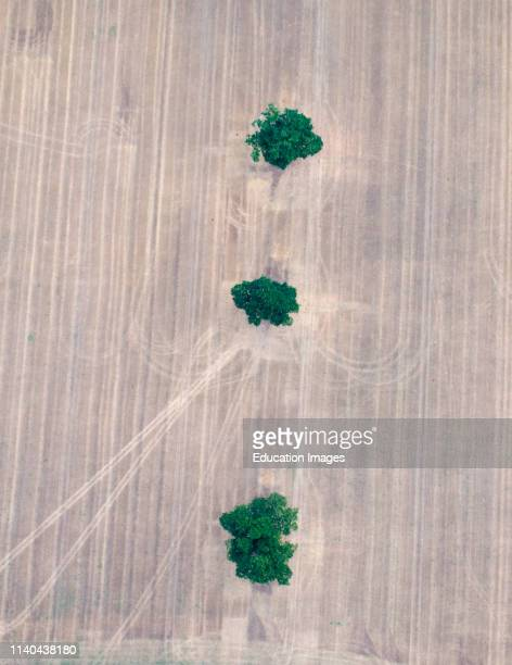 Aerial of Three Oak Trees in stubble field Norfolk