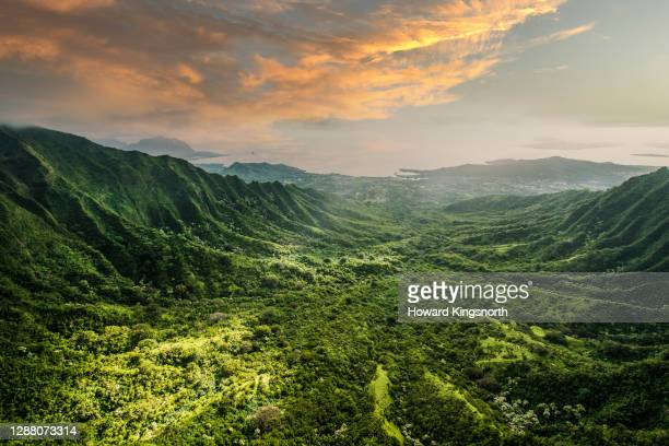 aerial of tropical rainforest - tropical climate stock pictures, royalty-free photos & images
