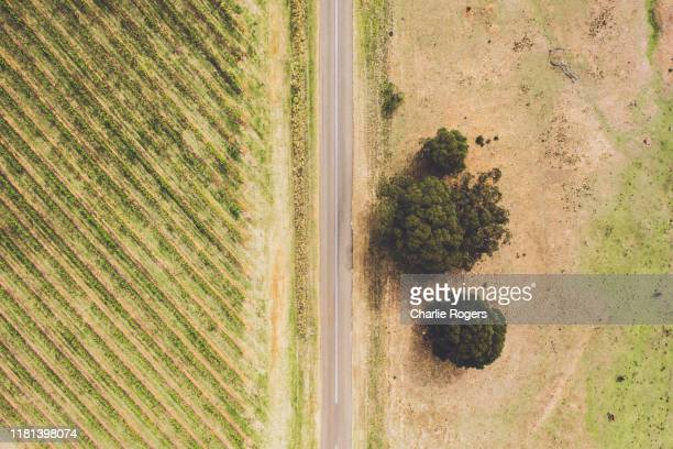 aerial of vineyard plants and crops - victoria australia stock pictures, royalty-free photos & images