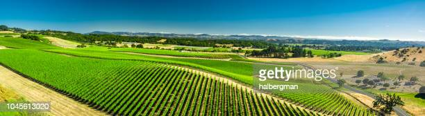 Aerial Panorama of Hillside Covered in Grapevines