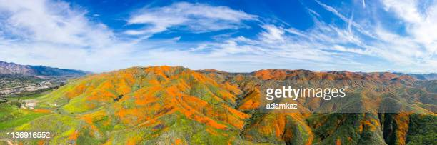 Aerial Panorama of Poppy Blooms