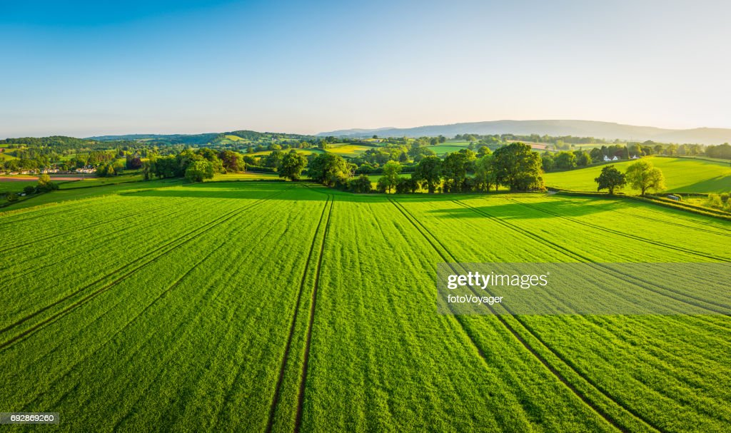 Aerial panorama over healthy green crops in patchwork pasture farmland : Stock Photo