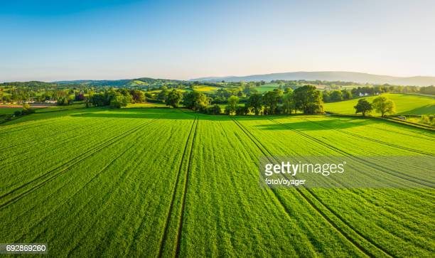 aerial panorama over healthy green crops in patchwork pasture farmland - campo foto e immagini stock