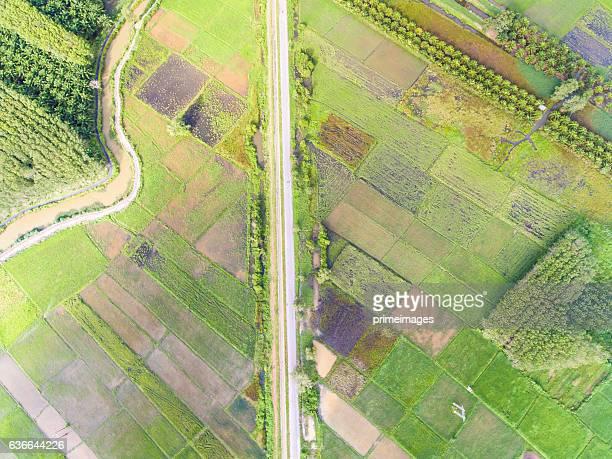 Aerial panorama scene of rice field Thailand