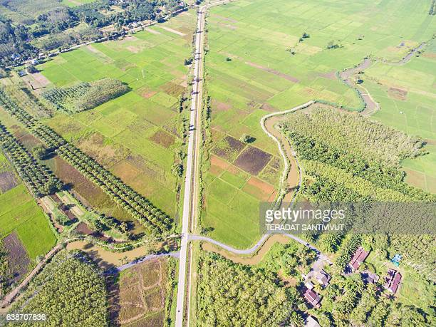 Aerial panorama scene of rice field Thailand