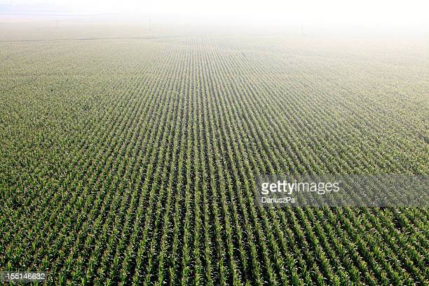 aerial photo. cultivation of maize - corn field stock photos and pictures
