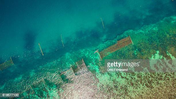 aerial photo of a fisherman and seaweed farm in nirawana beach, southeast sulawesi - helicopter photos stock pictures, royalty-free photos & images