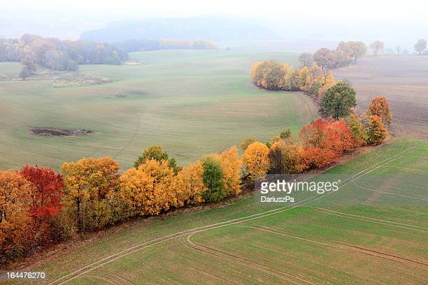 aerial photo of autumn trees - pomorskie province stock photos and pictures