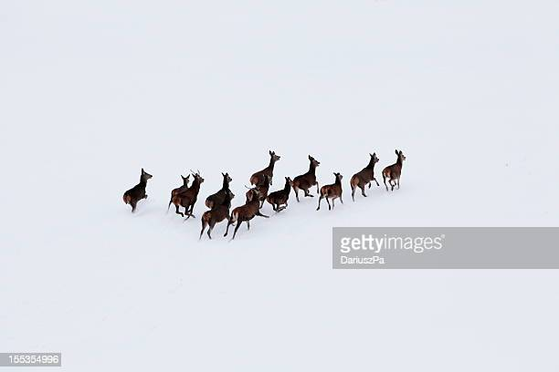 foto aerea di deer mandria - cervo maschio foto e immagini stock
