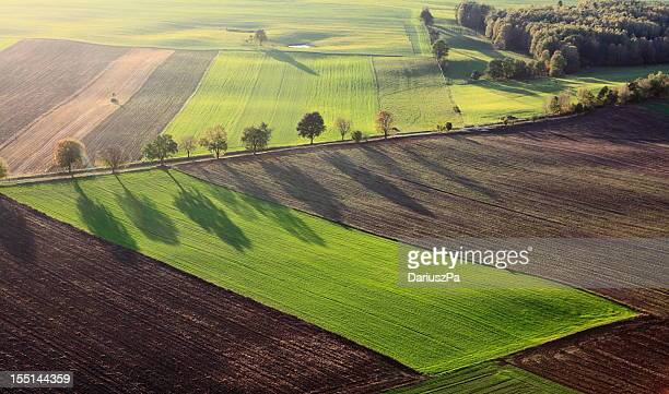 aerial photo of farm landscape with row of trees - cultivated land stock pictures, royalty-free photos & images