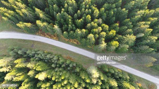 aerial photo of forest - single track stock pictures, royalty-free photos & images
