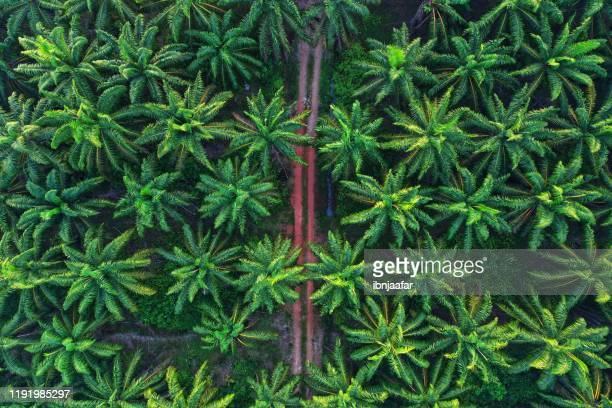 aerial photo of palm trees on morning - palm oil stock pictures, royalty-free photos & images
