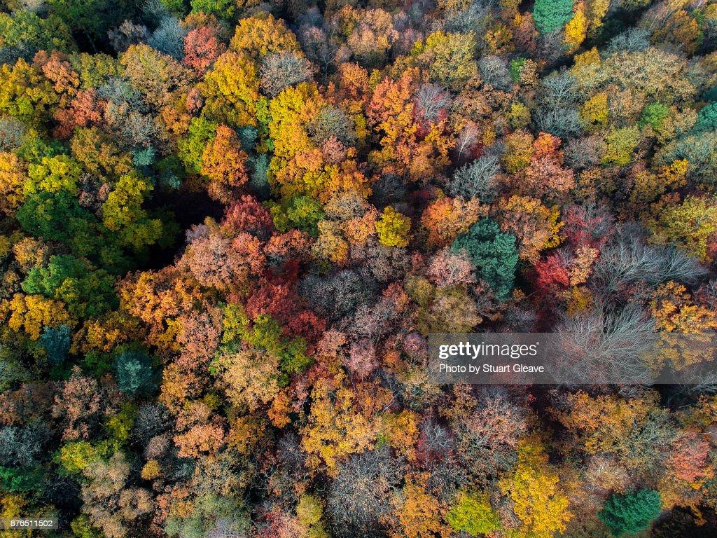 Aerial photo of uk woodland in autumn : Stock Photo