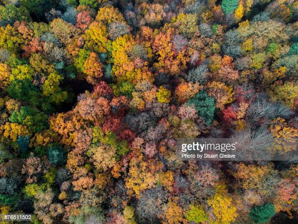 aerial photo of uk woodland in autumn - deciduous tree stock pictures, royalty-free photos & images