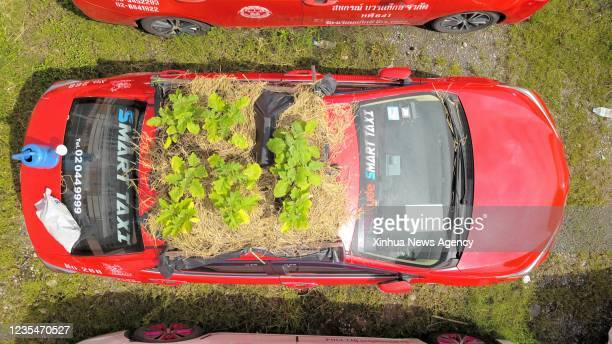 Aerial photo taken on Sept. 24, 2021 shows a taxi used to grow vegetables at a parking lot in Bankok, Thailand. At a parking lot on the outskirts of...