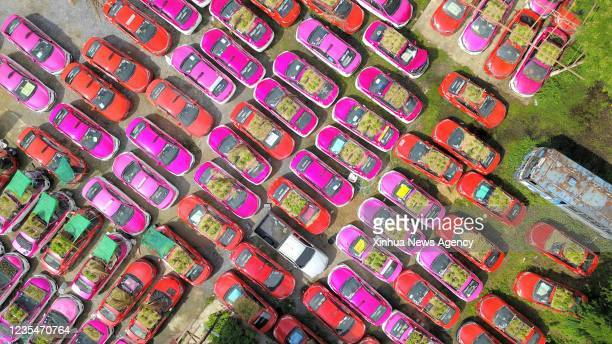 Aerial photo taken on Sept. 24, 2021 shows taxis used to grow vegetables at a parking lot in Bankok, Thailand. At a parking lot on the outskirts of...