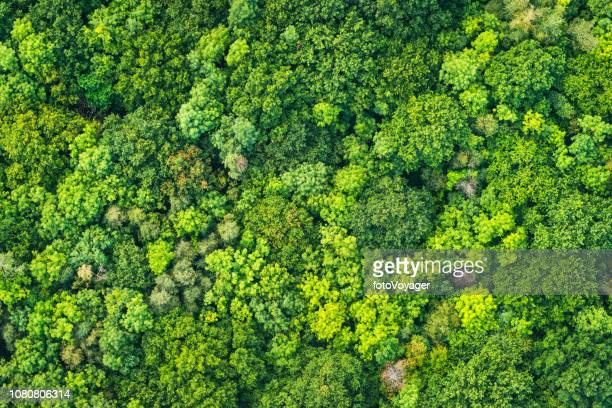 aerial photograph vibrant green tree canopy natural forest background - lush stock pictures, royalty-free photos & images