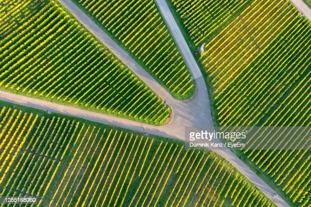 aerial photography of a vineyard at sunset. - baden württemberg stock pictures, royalty-free photos & images