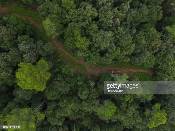 aerial photography with a drone, natural forest - catalunha imagens e fotografias de stock