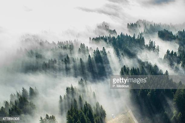 aerial picture of fog in the forrest - pine woodland stock pictures, royalty-free photos & images