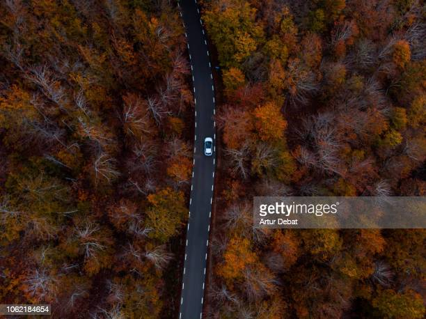 aerial picture of the stunning road between beech forest with autumn colors in the catalan mountains. - tripping falling stock pictures, royalty-free photos & images