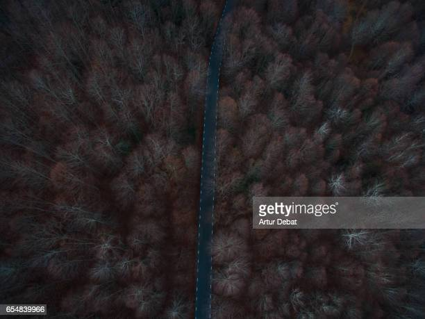 Aerial picture taken with drone of a beautiful mountain road crossing between a nice beech forest naked on winter without leaves and red color tone in a suggestive road for travel.