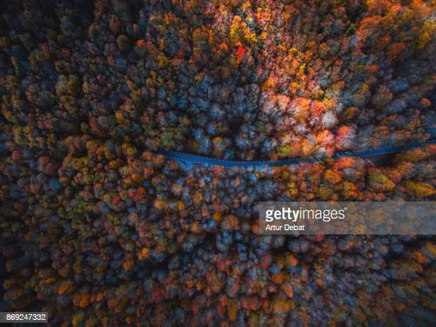 Aerial picture taking with drone flying over a stunning mountain road between forest with autumn colors in the Montseny nature reserve close to Barcelona city during day trip.