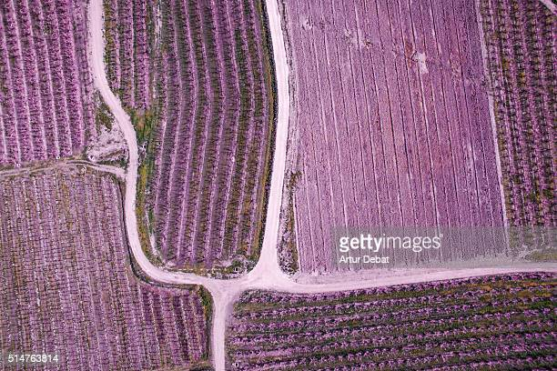 Aerial pictures from a drone in the cultivated lands of the Lleida plane in the Catalonia region with the beautiful pattern and texture created by the blooming trees with pink flowers and paths between the fields.