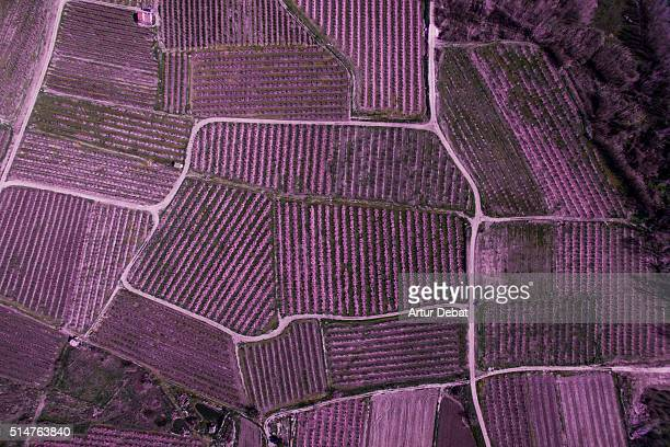 aerial pictures from a drone in the cultivated lands of the lleida plane in the catalonia region with the beautiful pattern and texture created by the blooming trees with pink flowers and paths between the fields. - レリダ県 ストックフォトと画像