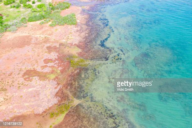 aerial scenic view looking down on the tropical waters of australia - アーネム ストックフォトと画像
