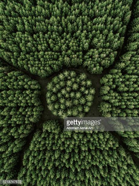 aerial shot above a strange looking forest, netherlands - drone point of view stock pictures, royalty-free photos & images