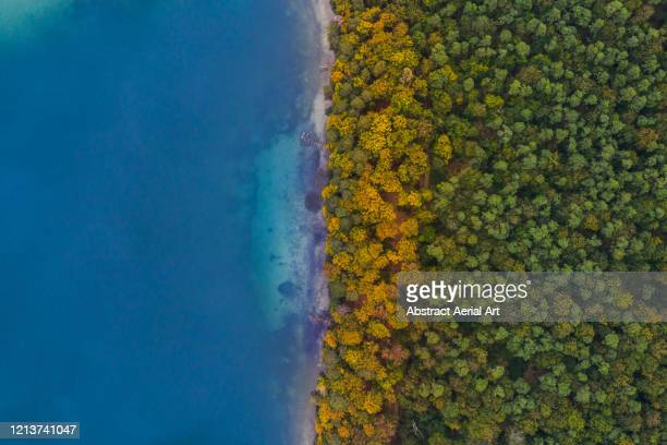 aerial shot of a forest on a lakeshore at the start of autumn, germany - land brandebourg photos et images de collection