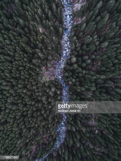 aerial shot of a river flowing through swiss trees - fluss stock-fotos und bilder