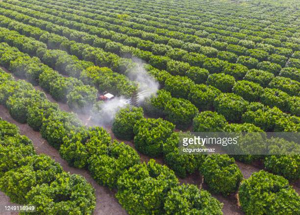 aerial shot of a tractor spraying insecticide or fungicide on orange trees in a large garden - crop sprayer stock pictures, royalty-free photos & images