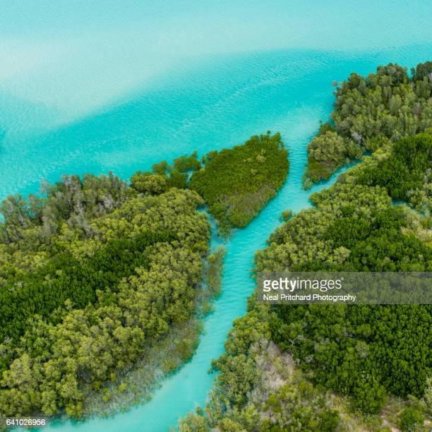 Aerial shot of tropical mangrove