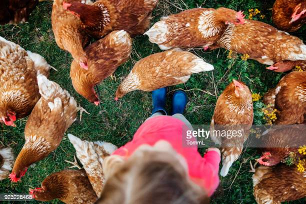 Aerial Shot Of Young Girl Standing Amongst Flock Of Chickens