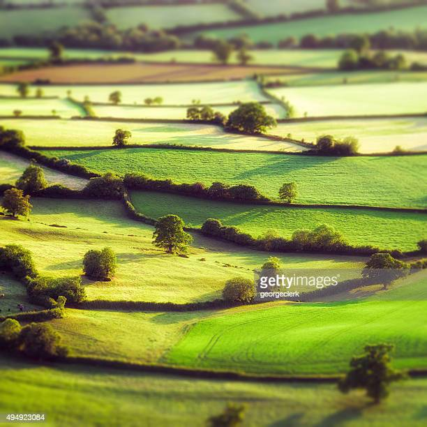 aerial tilt-shift view of pastoral english fields - somerset england stock pictures, royalty-free photos & images