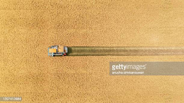 aerial top view harvester machine working in rice fields, asia, thailand. - grain harvest stock pictures, royalty-free photos & images