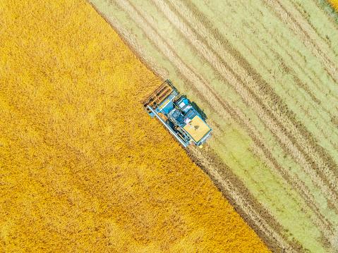 aerial top view harvester machine working in rice fields, Asia, thailand. - gettyimageskorea