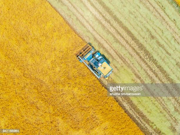 aerial top view harvester machine working in rice fields, Asia, thailand.