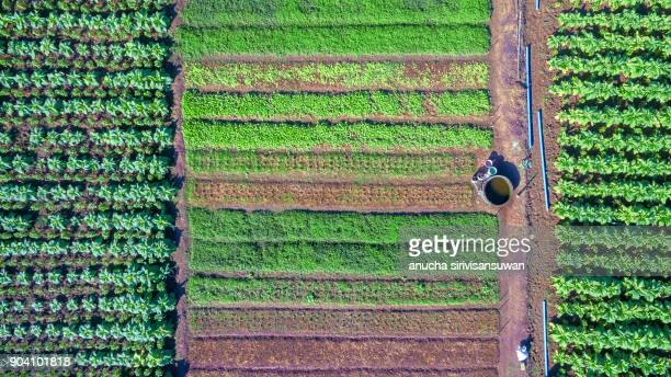 aerial top view integrated agriculture, Mixed vegetable garden.