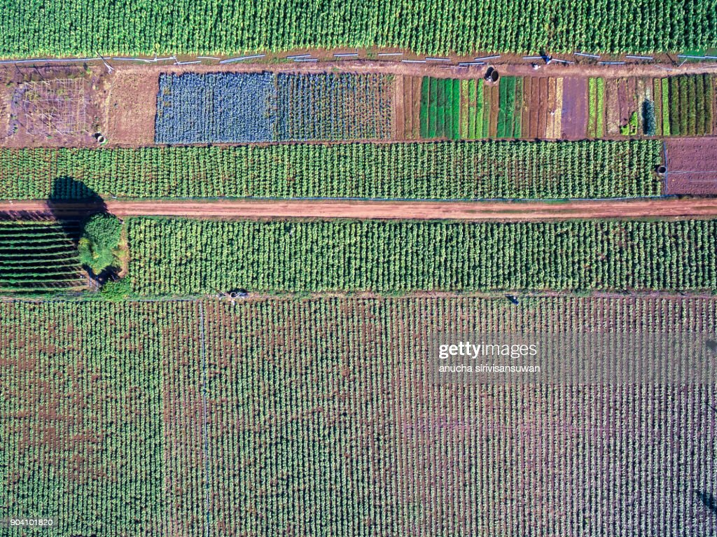 Aerial Top View Integrated Agriculture Mixed Vegetable Garden Stock Photo