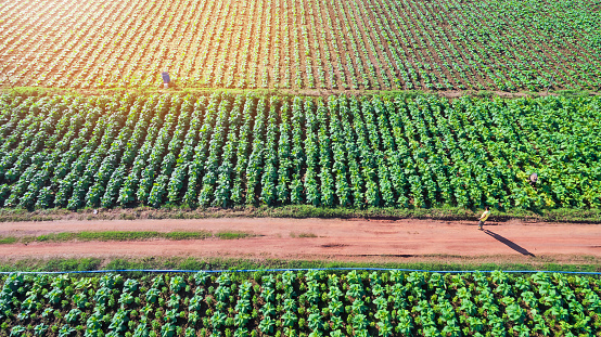 aerial top view integrated agriculture, Mixed vegetable garden. - gettyimageskorea