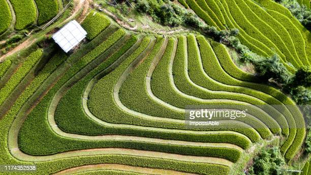 aerial top view of green rice terrace with beautiful curve and lines on the mountain landscape view at mu cang chai, vietnam - impossiable stock pictures, royalty-free photos & images